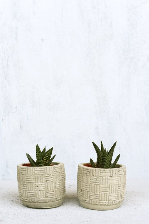 Green Cactus Plant in Brown Wicker Pot