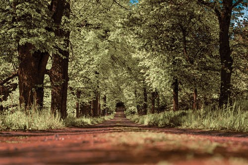Low Angle Photo of Unpaved Road in Between Green Trees