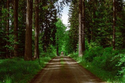 Kostenloses Stock Foto zu außerorts, bäume, beratung