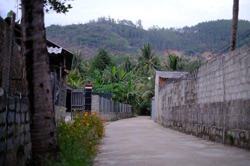 Fotos de stock gratuitas de pueblo, pueblo de vietnam, tierra agricola, Vietnam