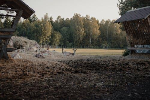 Deers Resting on a Field