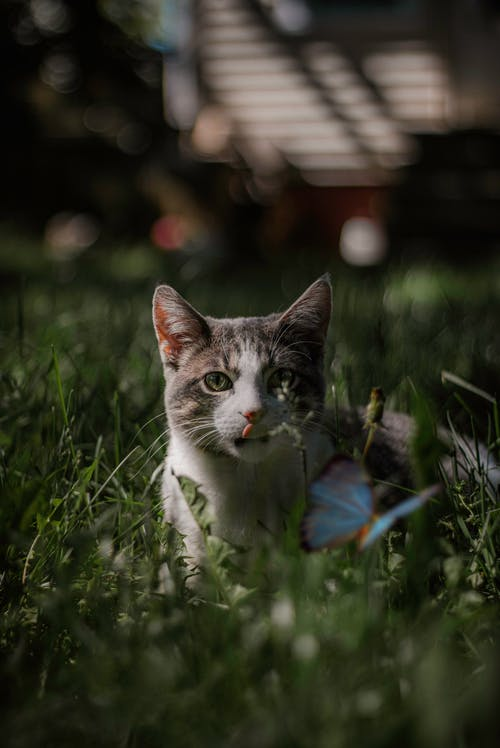 Photo of Cat on Green Grass