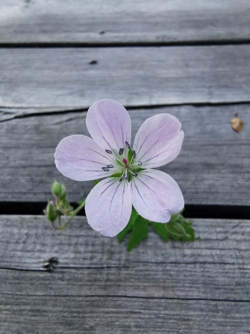 Free stock photo of flower, violet