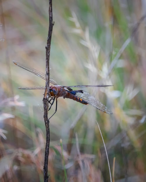 Ilmainen kuvapankkikuva tunnisteilla sudenkorento