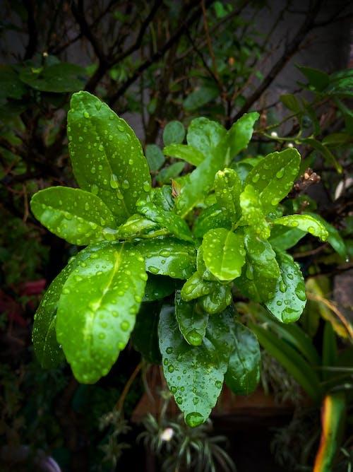 Free stock photo of gotas de agua, hojas verdes