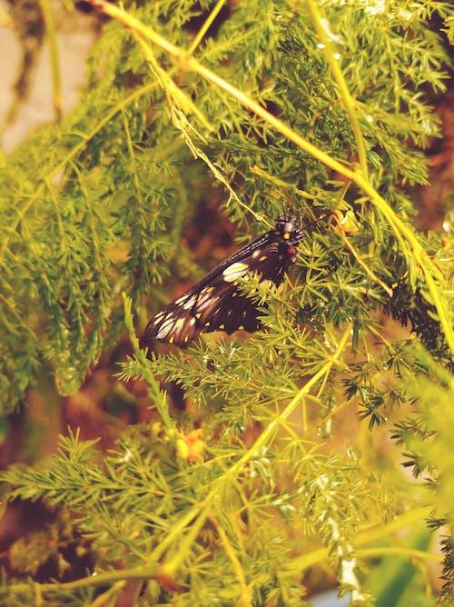 Free stock photo of filtro, mariposa