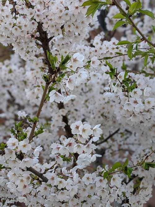 Free stock photo of blossom, blossoming, flower, flowers