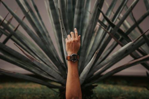 Imagine de stoc gratuită din agavă, aloe, ascuțit, cactus