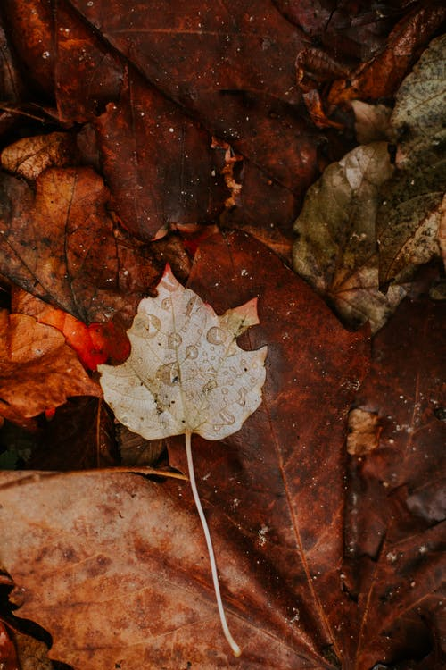 White and Brown Leaf on Brown Dried Leaves