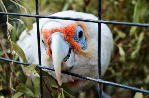깃털, 날개, 동물의 무료 스톡 사진