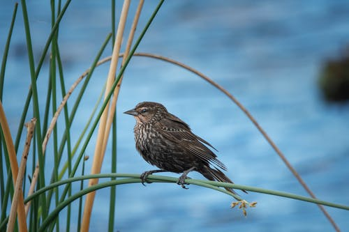 Brown Bird Perched on Green Plant