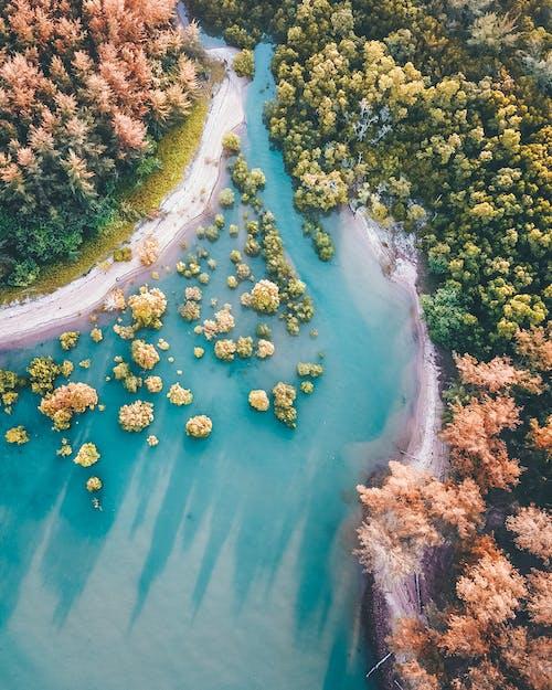 Vista Aérea De árboles Verdes Y Río