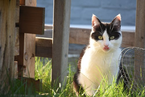 White and Black Cat on Green Grass