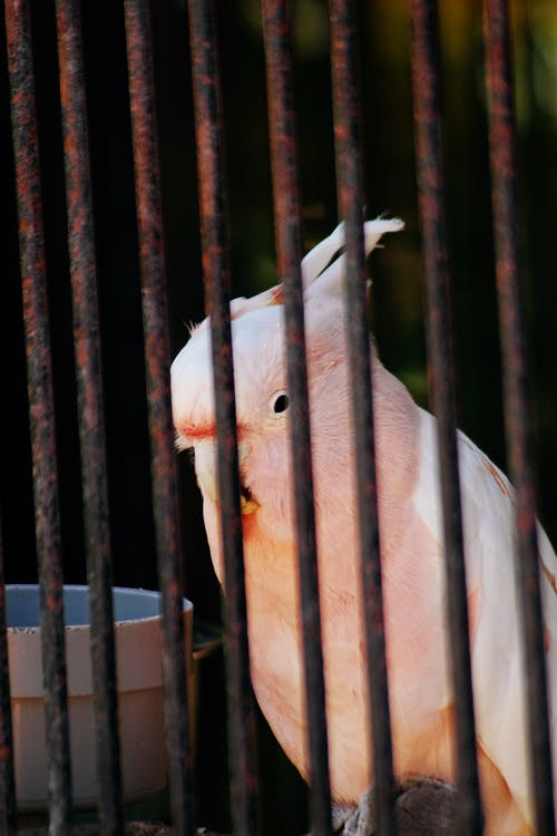 Photo of Bird in Cage