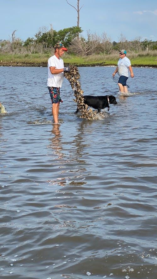 Бесплатное стоковое фото с agbiopix, аквакультура, засеивание, кедр остров