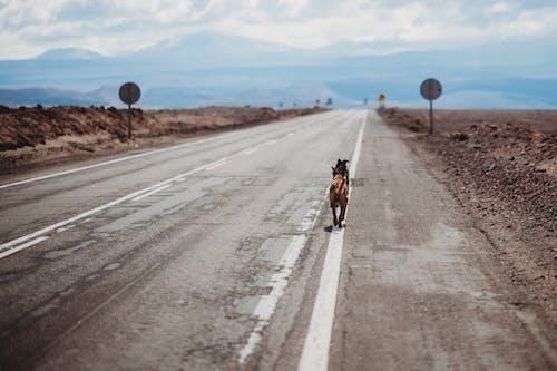 Fotos de stock gratuitas de al aire libre, animal, asfalto, autopista