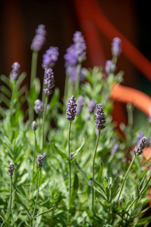 Selective Focus Photo of Purple Flowers