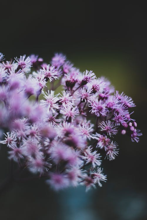 Purple Flowers in Close Up Photography