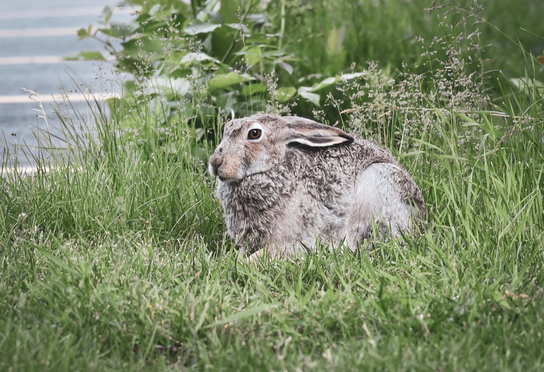 rabbits eat hay