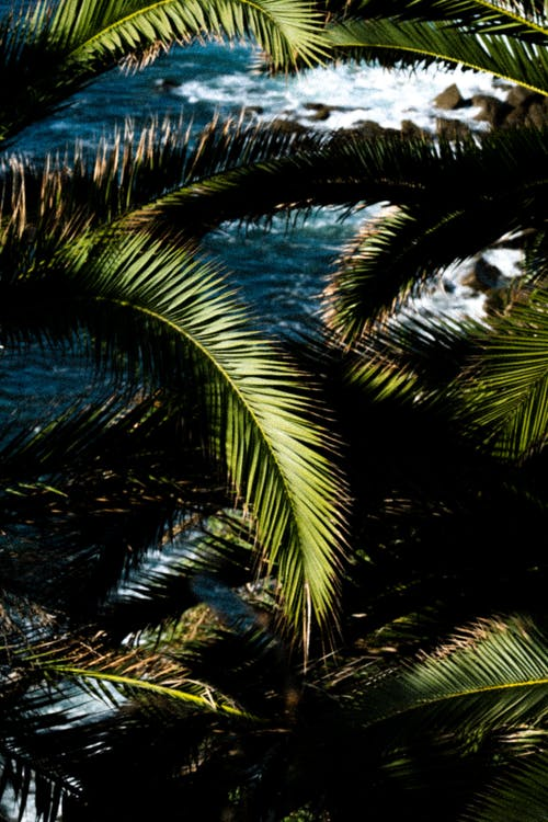 Green Palm Tree Near Body of Water