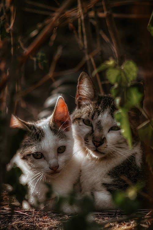 Gratis stockfoto met aanbiddelijk, beesten, cyperse kat, depth of field