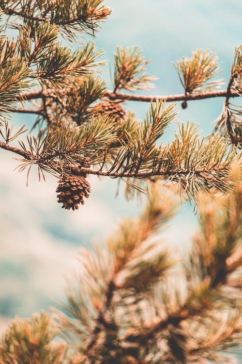 ağaç, ahşap, bulanıklık, çam içeren Ücretsiz stok fotoğraf