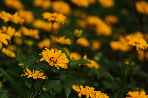 Kostnadsfri bild av 4k tapeter, blomknopp, blommor