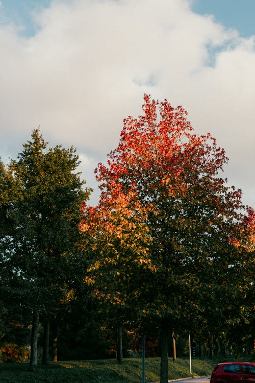 Free stock photo of autumn, color, leafs, tree