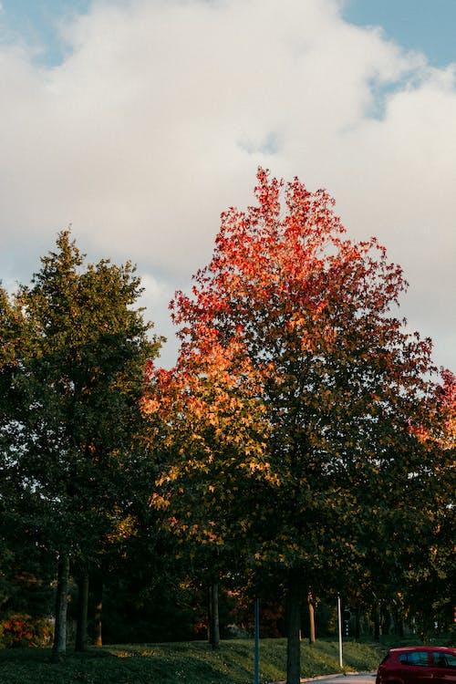 Immagine gratuita di alberi, albero, autunno, colore