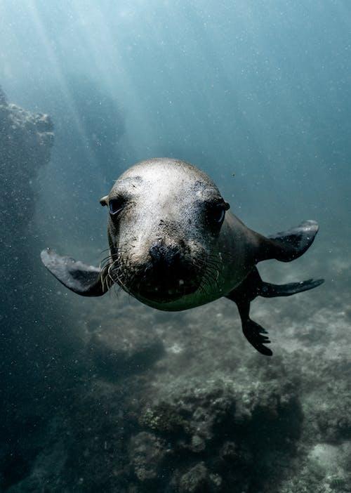 Sea Lion Swimming in the Sea