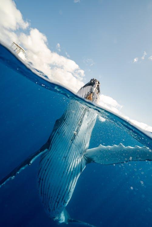 Split Shot of Whale