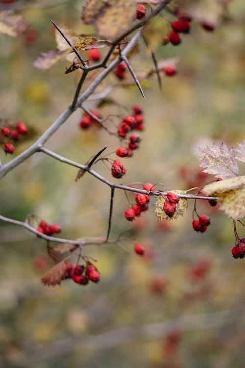 가시, 가지, 나뭇가지의 무료 스톡 사진