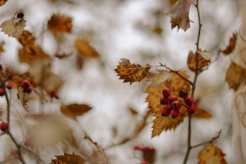 가지, 나뭇가지, 나뭇잎의 무료 스톡 사진