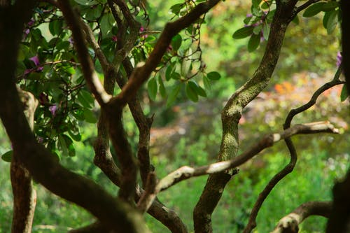 Free stock photo of branches, flowering bush, tree
