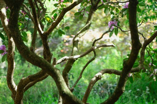 Free stock photo of flowering bush, tree
