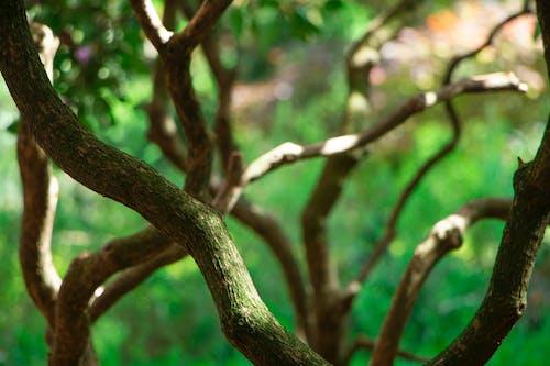 Free stock photo of branch, bush, tree