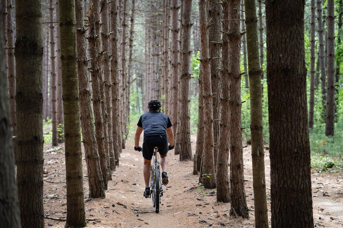 Photos gratuites de action, activité, arbres
