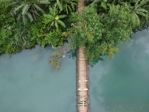 Immagine gratuita di acqua, aereo, albero