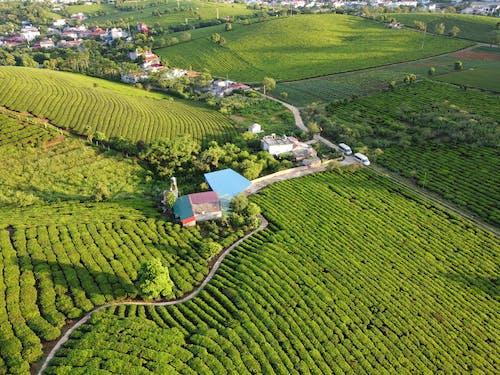Fotos de stock gratuitas de agricultura, al aire libre, arroz, campo
