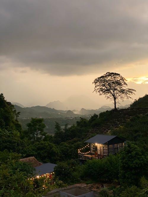 Fotos de stock gratuitas de agua, al aire libre, amanecer, árbol