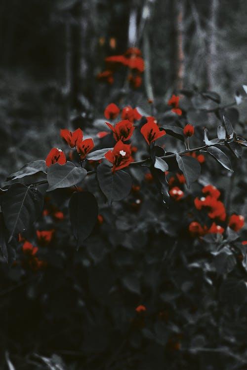 Gratis stockfoto met as, blad, bladeren, bloem