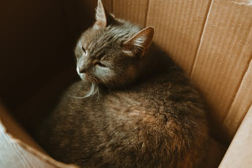 Black Cat on Brown Cardboard Box
