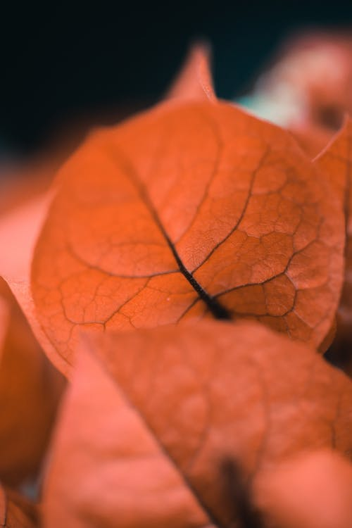 Brown Leaf in Macro Shot