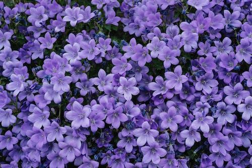 Ảnh lưu trữ miễn phí về cánh đồng, cánh hoa, đẹp, hệ thực vật
