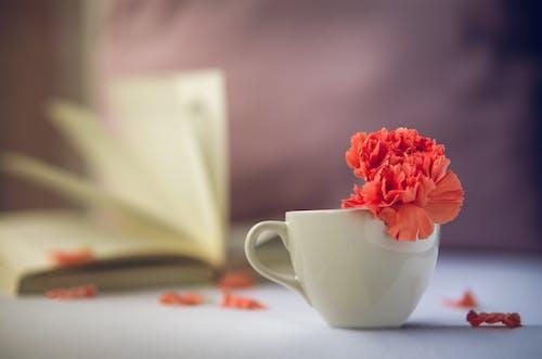Free stock photo of bloem, boek, cappuccino