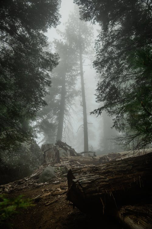 Low Angle Photography Of A Forest On A Foggy Day