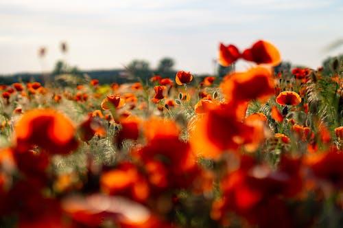 Orange Flowers in the Field
