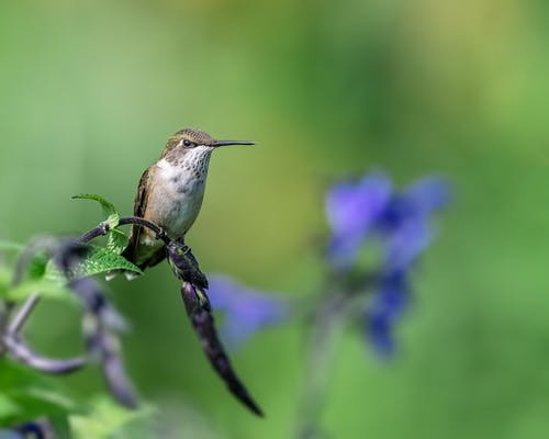Colibri sitting on branch of plant