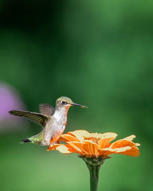 Tiny hummingbird sitting on flower