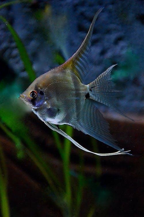 杂食性, 水下, 淡水鱼 的 免费素材图片